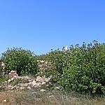 Ancient housing