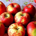 Apples still lifes_1