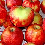 Apples still lifes_5