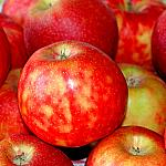 Apples still lifes_6