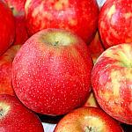 Apples still lifes_7