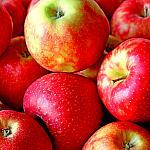Apples still lifes_8