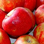 Apples still lifes_9