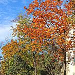 Autumn colors