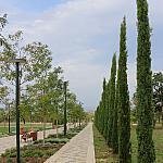Cypresses and acacia trees