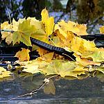 Leaves on the hood