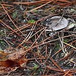 Needles and mushroom