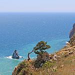 Pine and sea