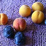 Plums and peaches_7