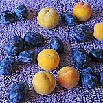 Plums and peaches_8