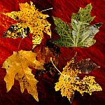 Simply Autumn_2