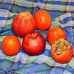 Still lifes with persimmon_3