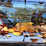 Teaching leaves