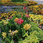 Varicolored flowers