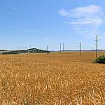 Wheat and wires