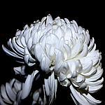 White_1