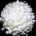 White_2