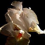 The Flower's Dream of Depth