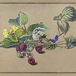 Ветка малины, бабочка и муравей