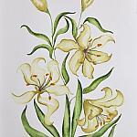 "ASIATIC LILY ""ELECTRIC YELLOW"