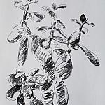 Plant. Paper, гр. карандаш, 42-30, 2010.