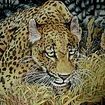 jaguar-natural-silk